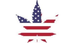 Immer mehr Bundesstaaten in den USA legalisieren Cannabis. Es warten riesige Geschäfte - für die Privatwirtschaft und für den Staat. Foto: Gordon Johnson via Pixabay